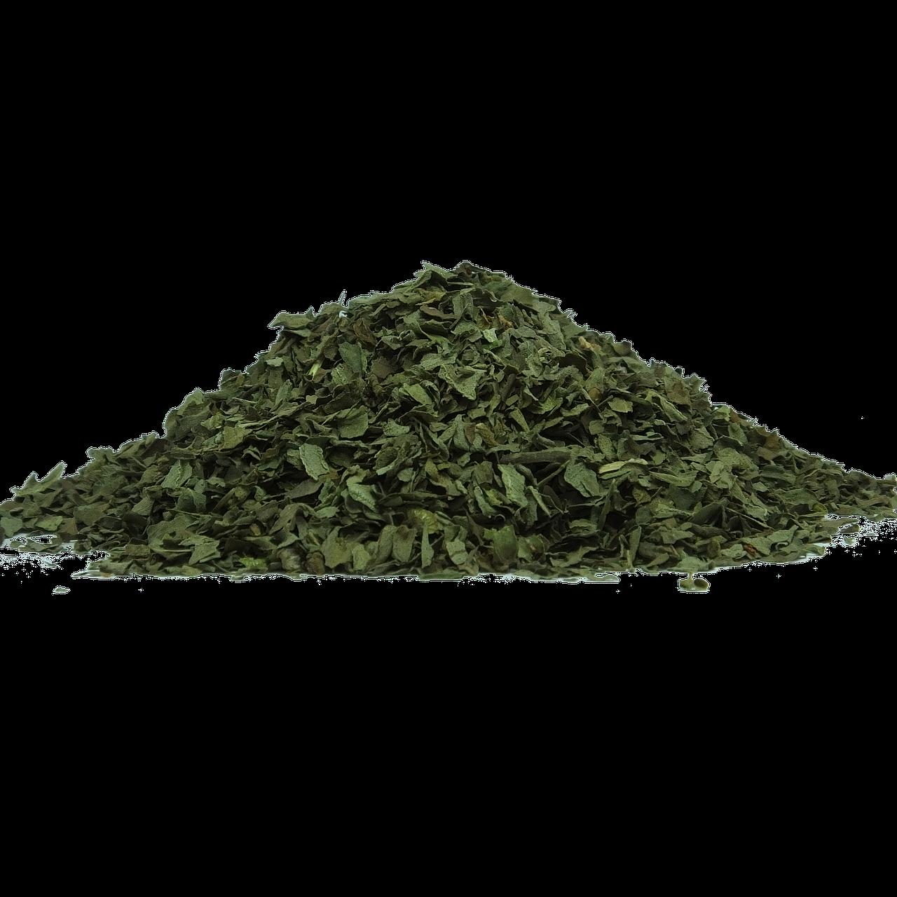 Grüner Tee und seine besondere Wirkung